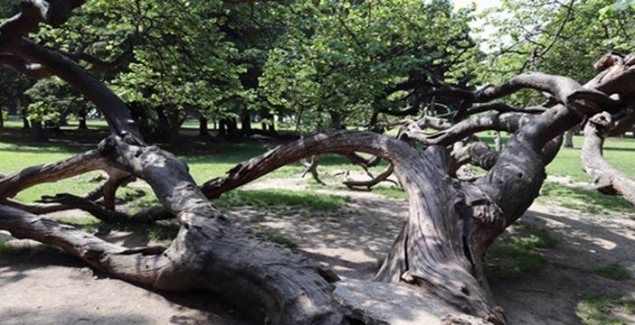 Filibe'de bir çocuğun üzerine ağaç devrildi